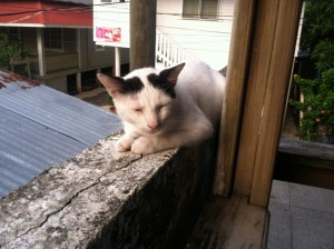 Utila Diver Center cat. His name is killer.