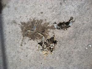 Crab roadkill