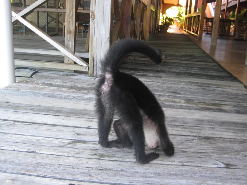 Monkey Butt