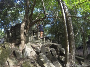 Beng-Melea-tree
