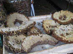 Bee larva - a local delicacy!