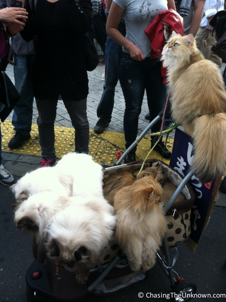 There was just a dude in Shibuya crossing (Tokyo) just hanging out with a carriage full of fluffy kitties.