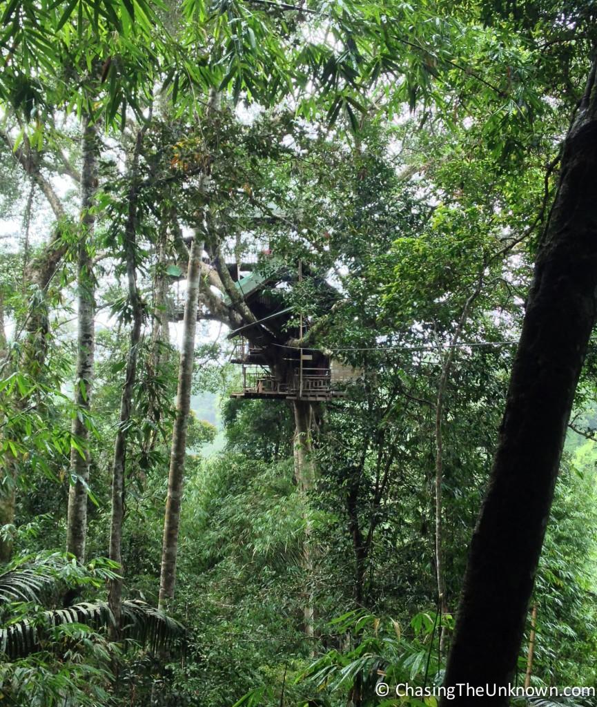 Gibbon-Experience-Treehouse
