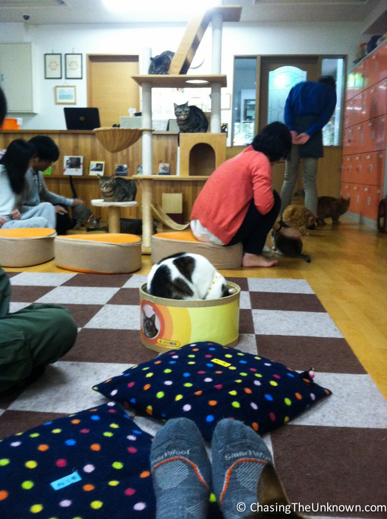 Cat cafe in Kyoto.
