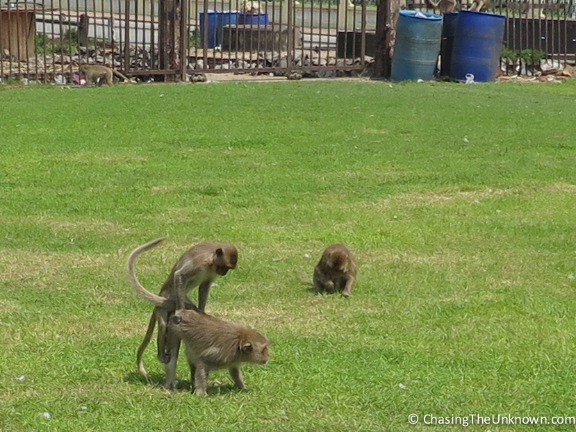 Ancient Ruins and Copulating Monkeys
