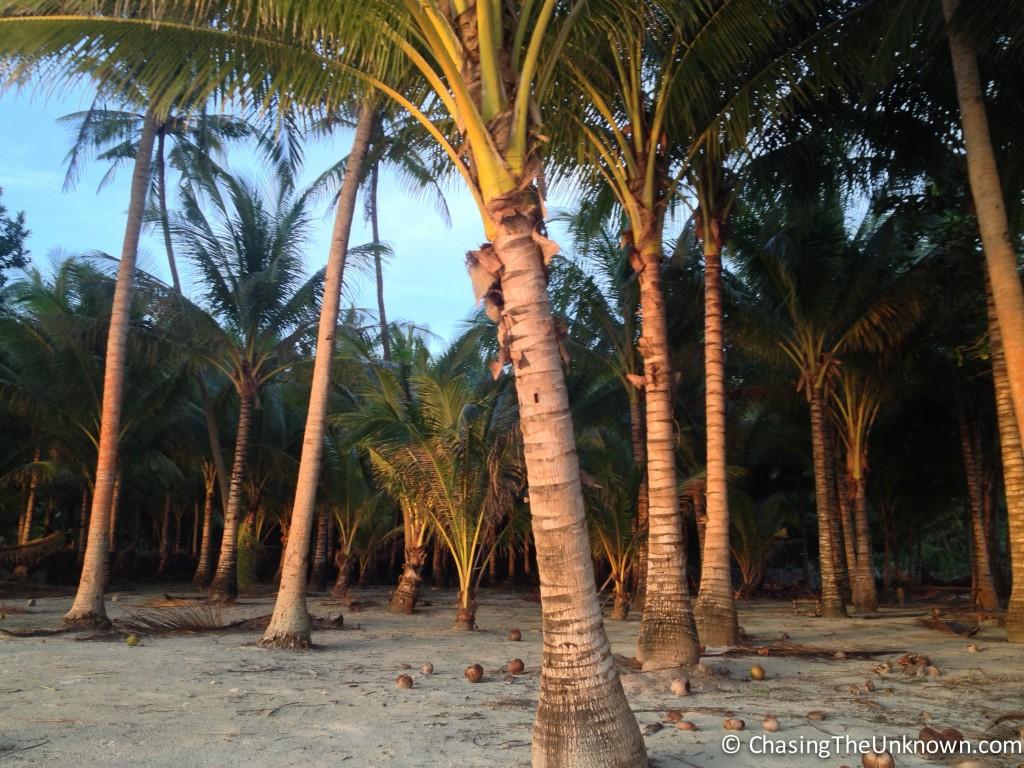 coconut-grove-siquijor