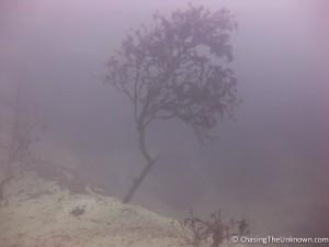 underwater-tree-barracuda-lake