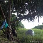 Kipahulu campsite Maui