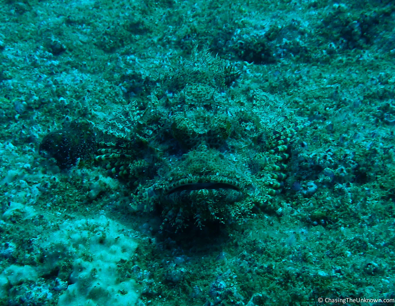 scorpionfish-tofo