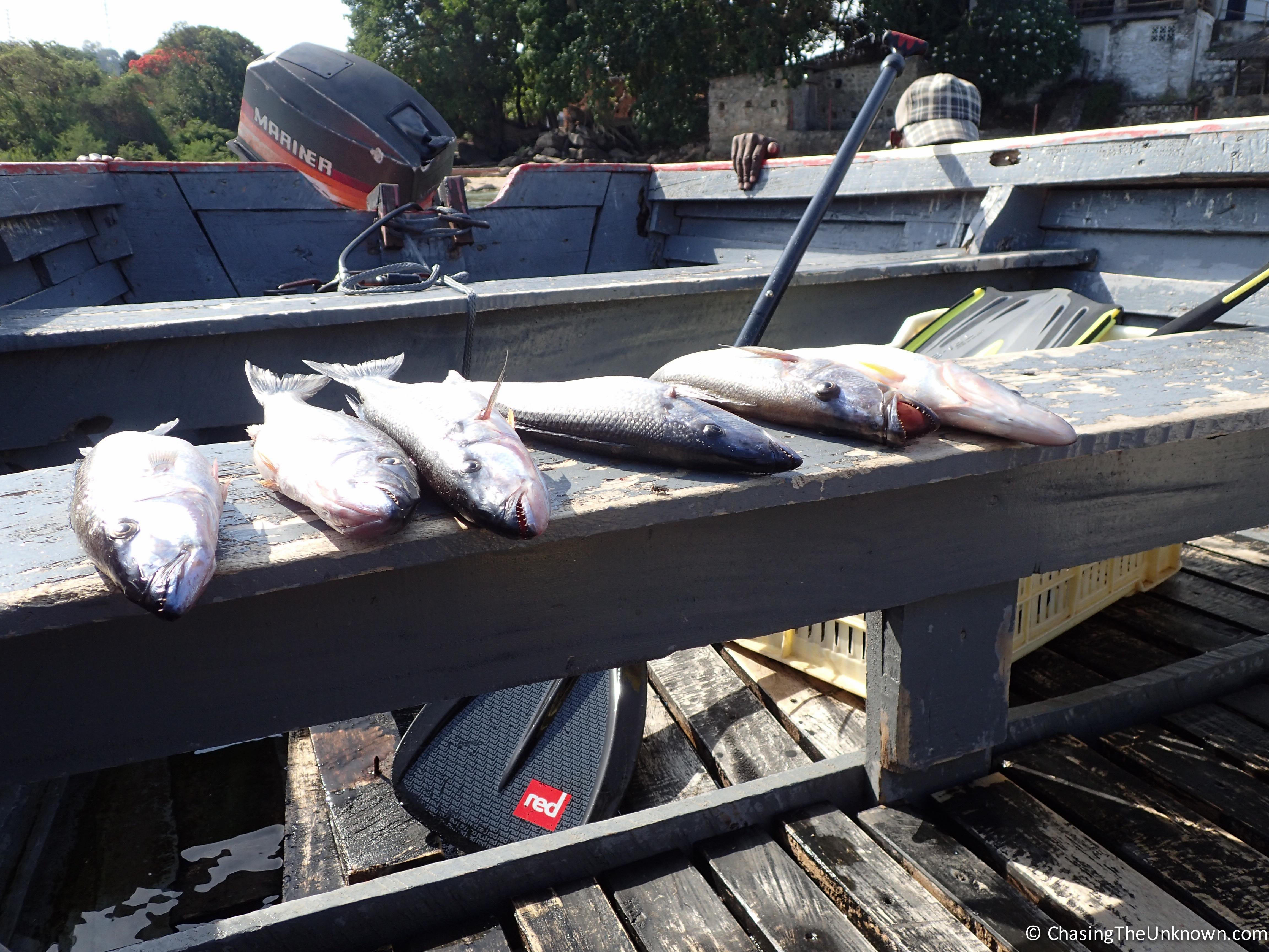 dead-butterfish-lake-malawi