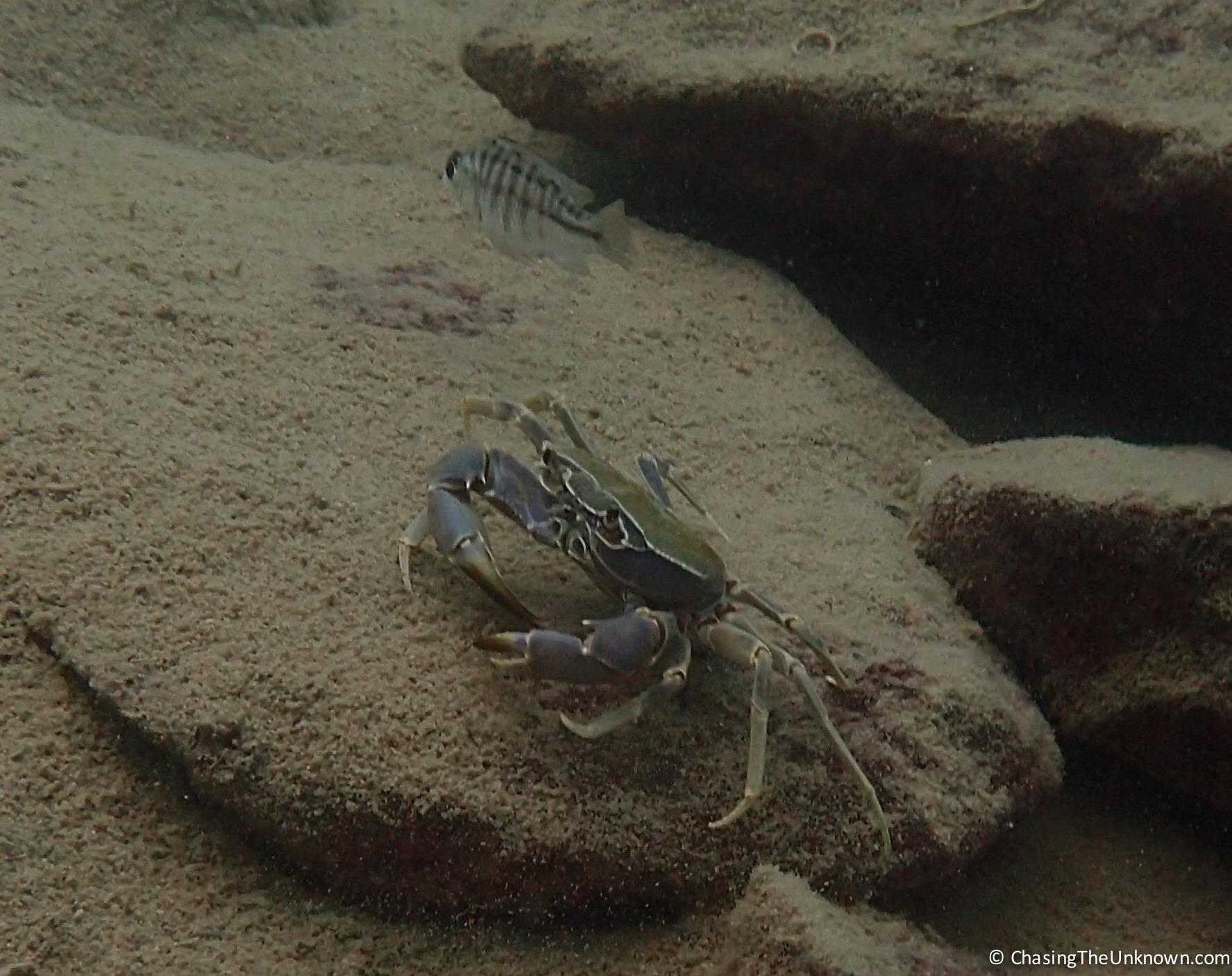 crab-lake-malawi