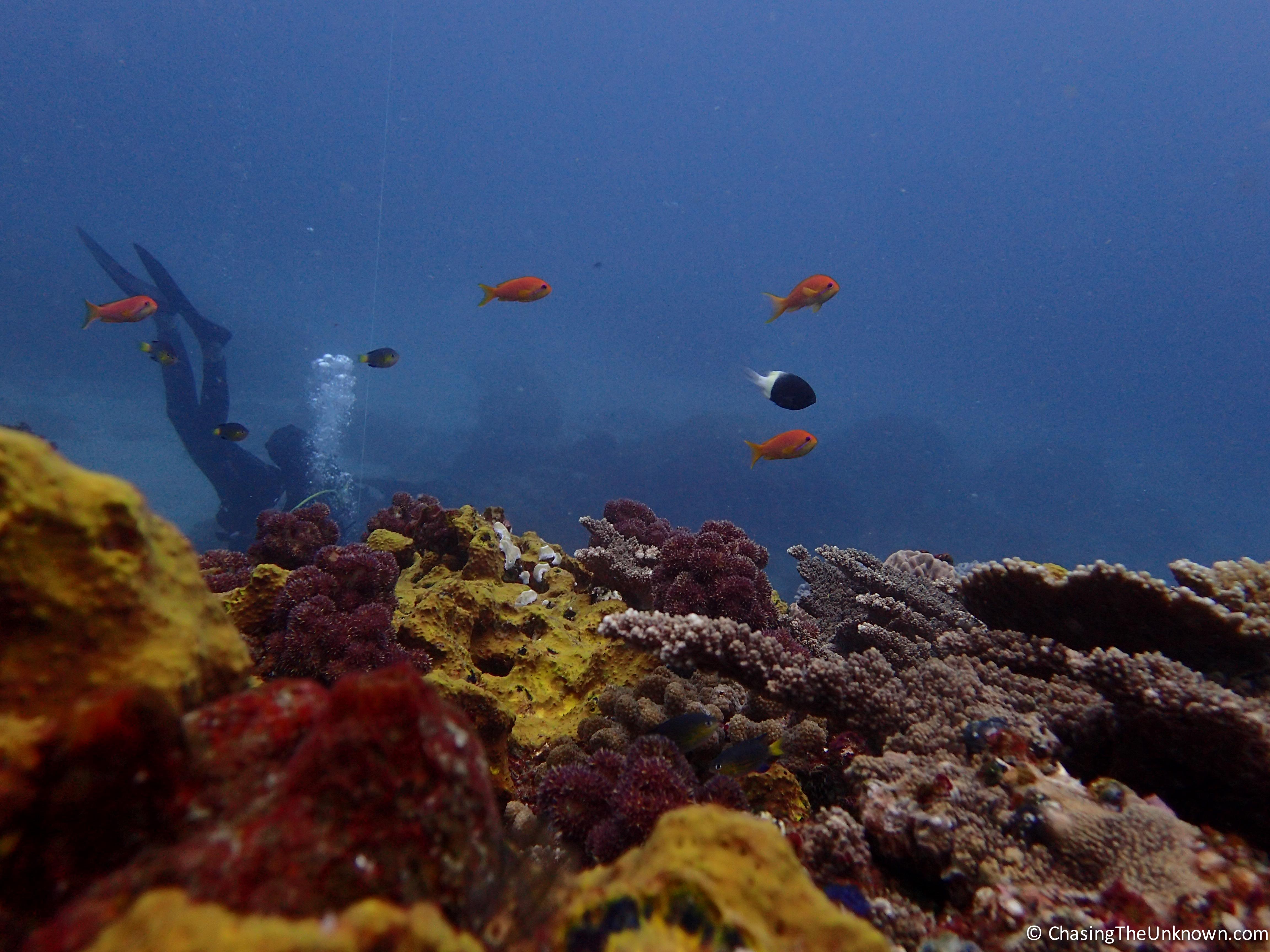antons-reef-sodwana