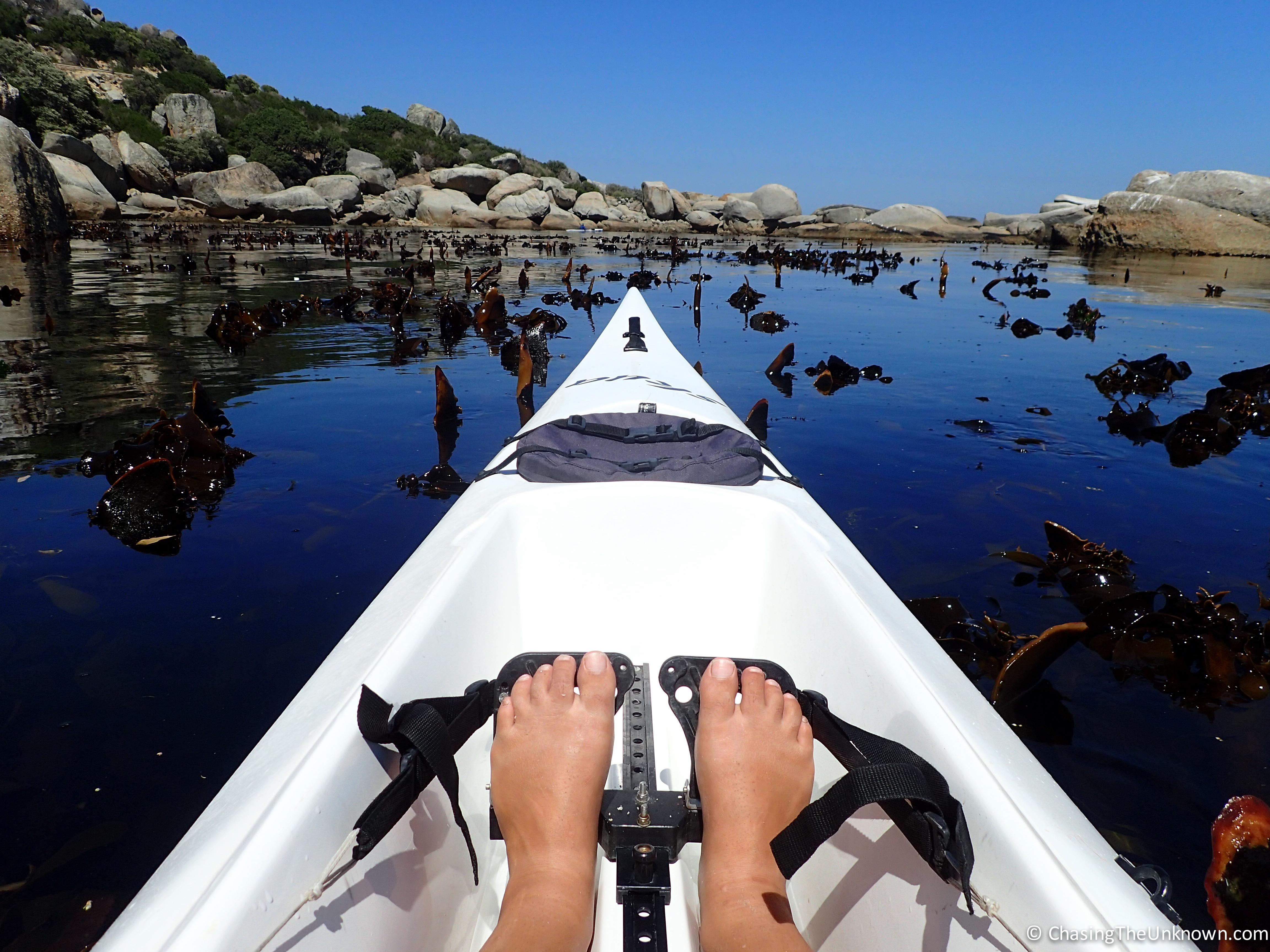 kayaking-in-kelp