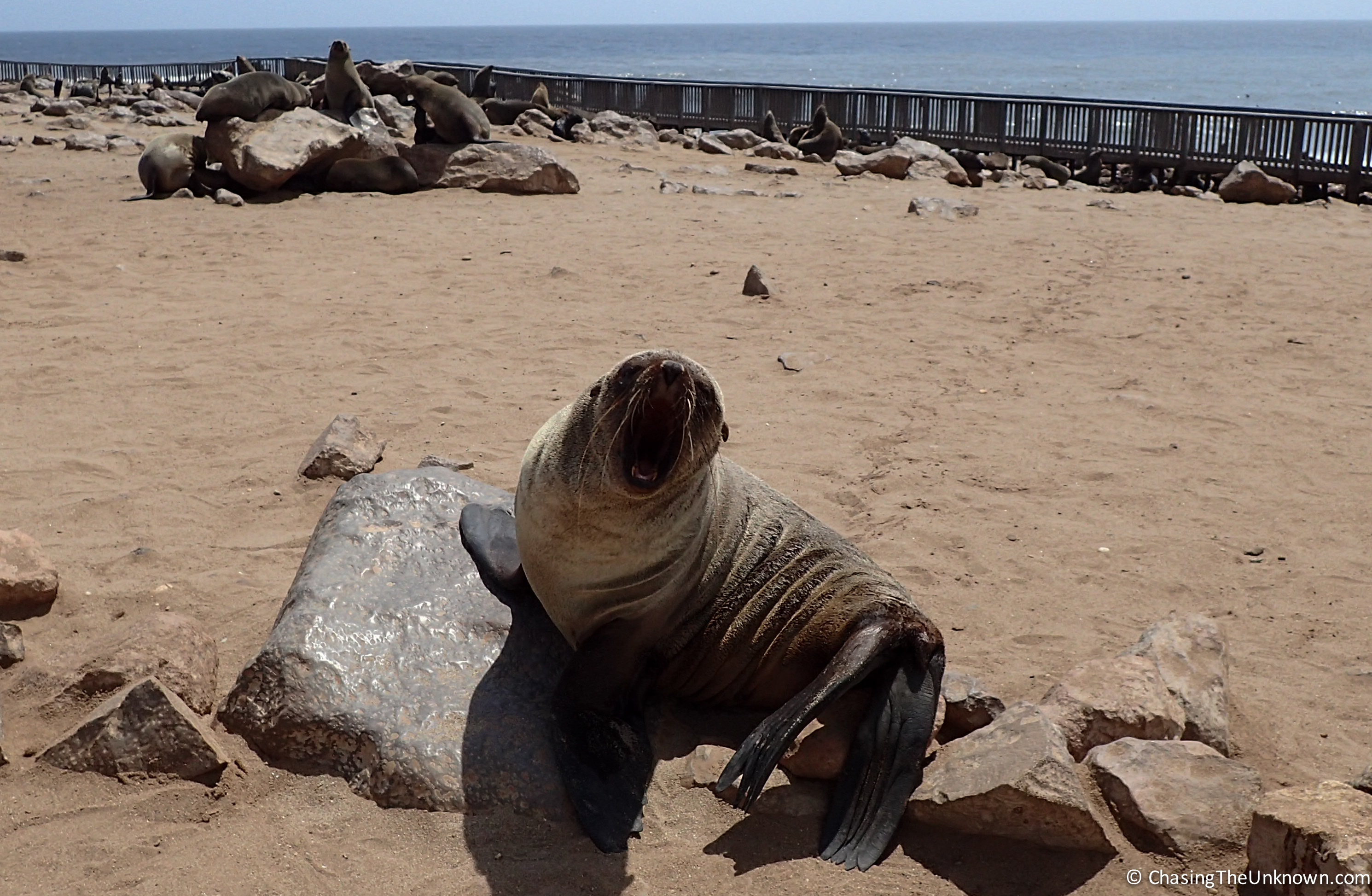 cape-fur-seal-namibia
