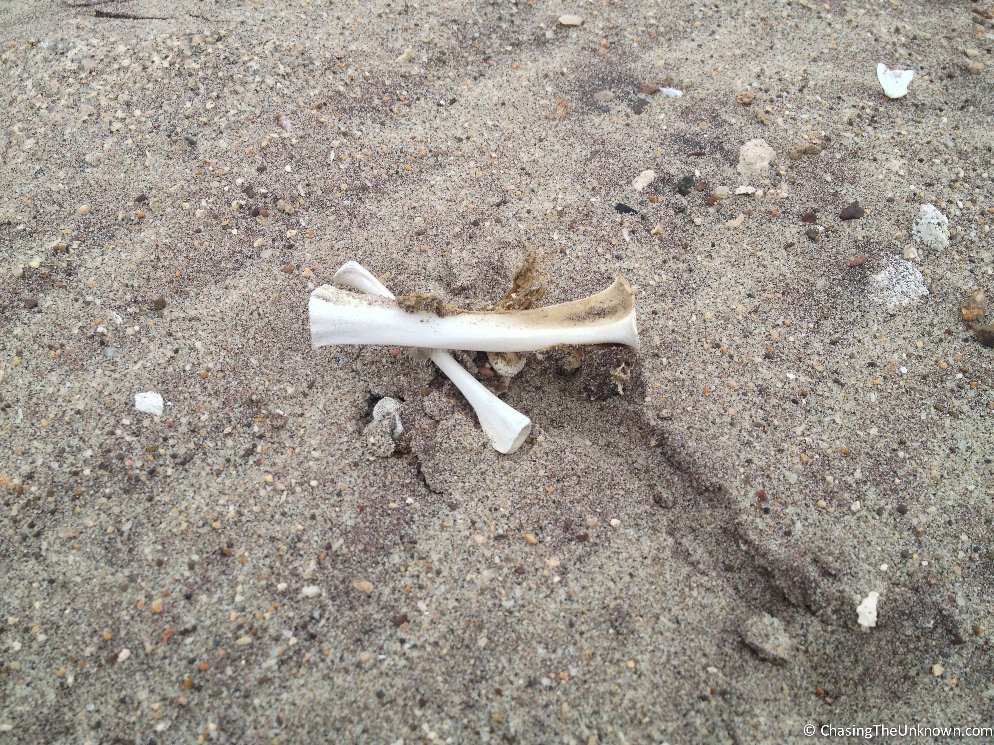 bones-skeleton-coast