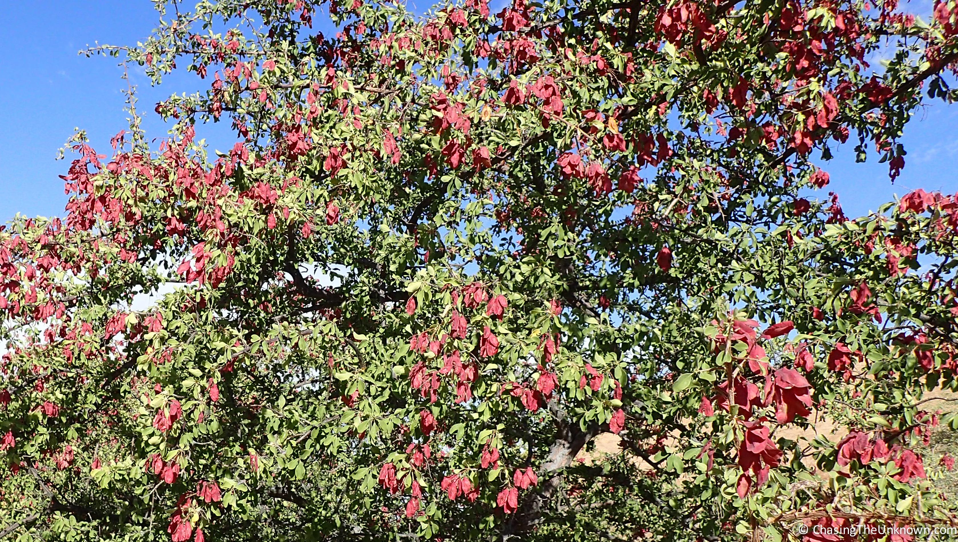 non-endemic-plant-Spitzkoppe