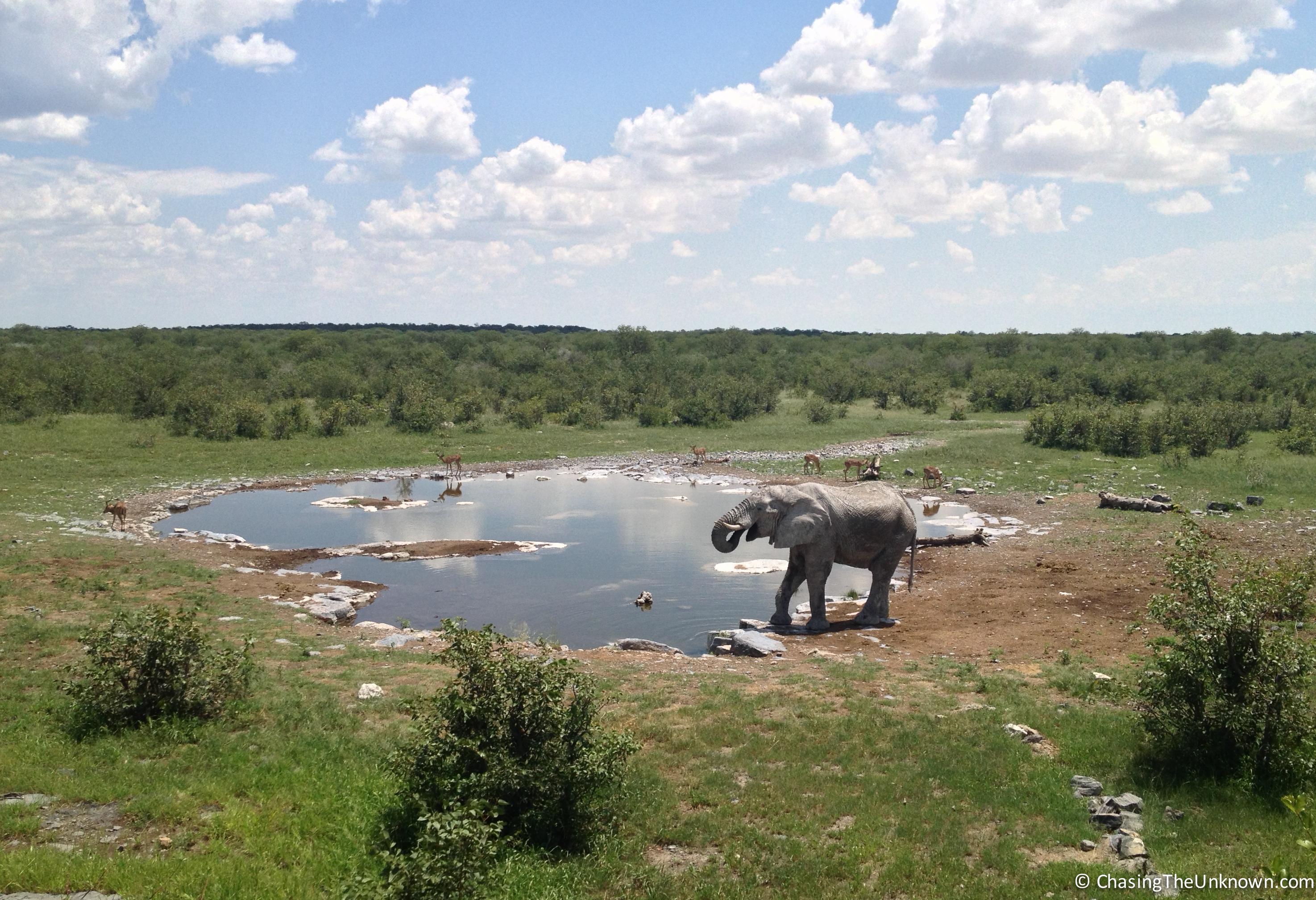elephant-Halali
