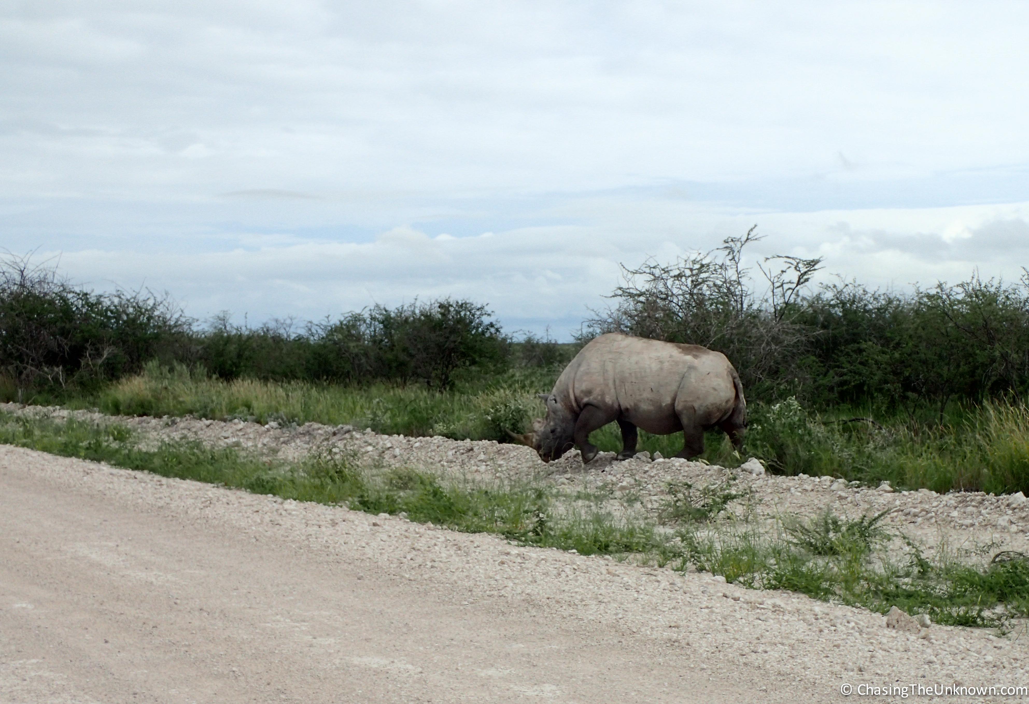 rhino-crossing-etosha