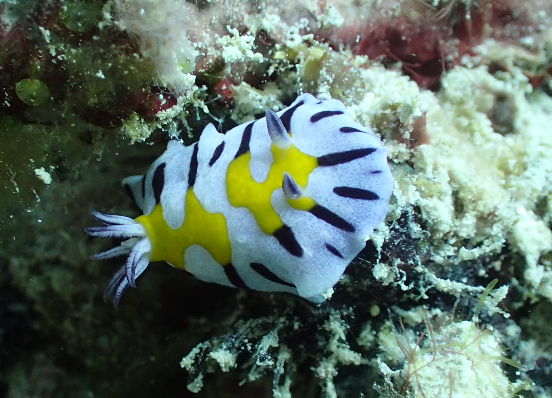 nudibranch-bounty-wreck-gili