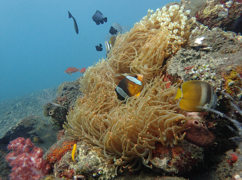 anemone-usat-liberty