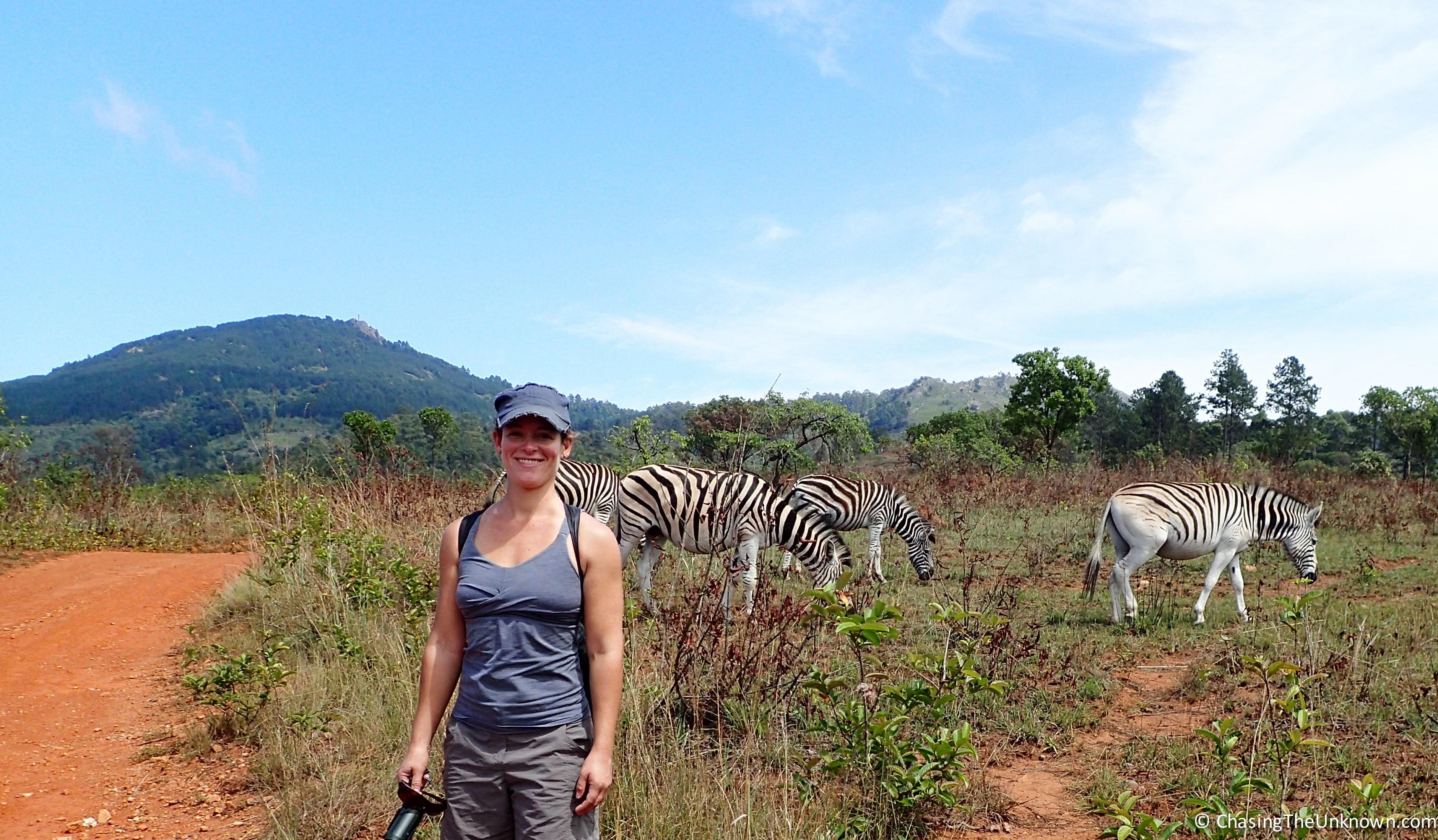 mlilwane-zebras