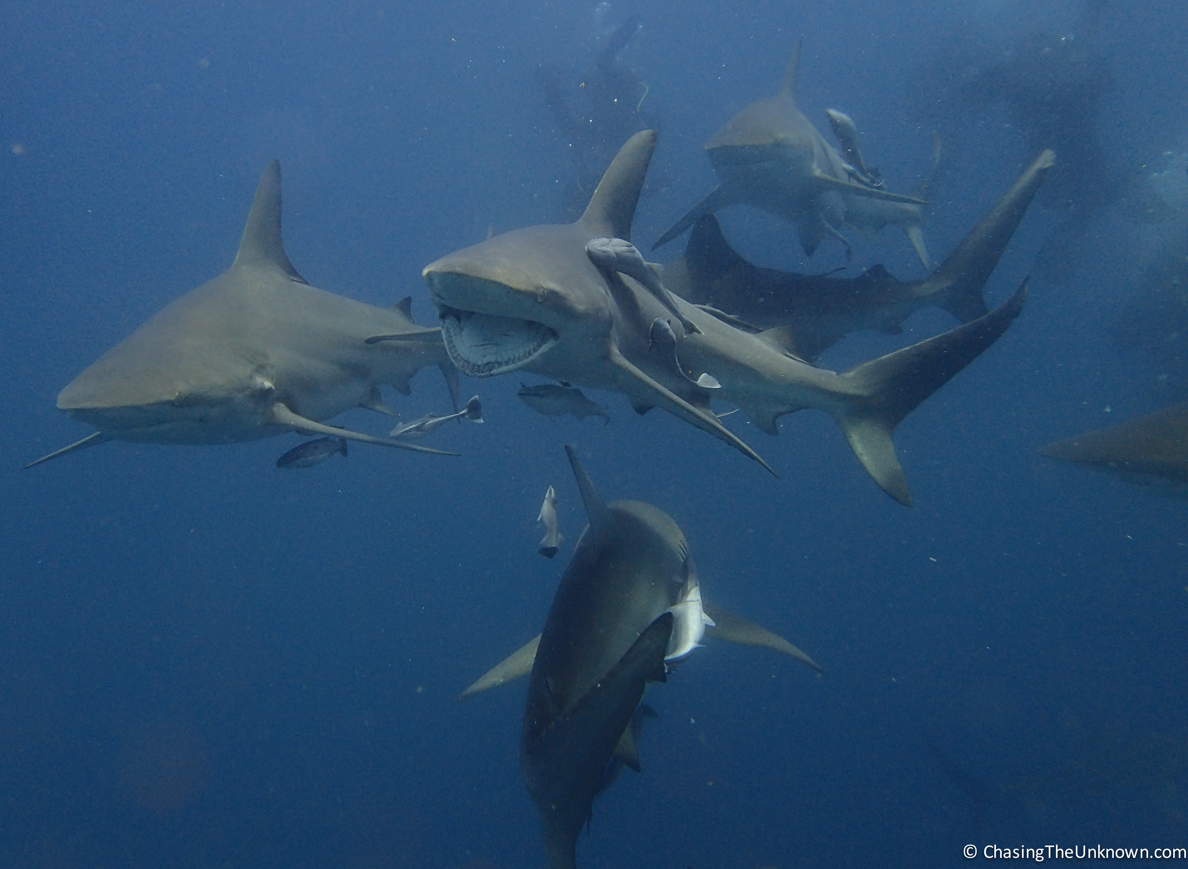 Diving in South Africa: Sodwana Bay & Aliwal Shoal